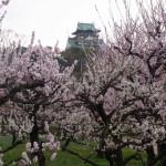 「大阪城梅林」で梅花見!