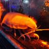 沼津港深海水族館はいろいろ本気でした
